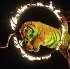 Цирки в Твери
