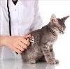 Ветеринарные клиники в Твери